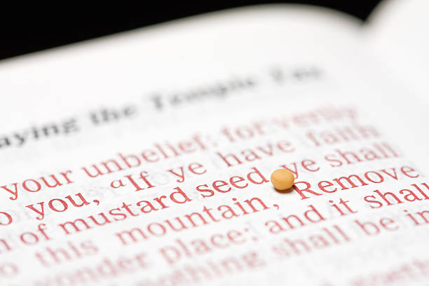 Royalty Free Mustard Seed Symbol Of Faith Pictures Images And Stock