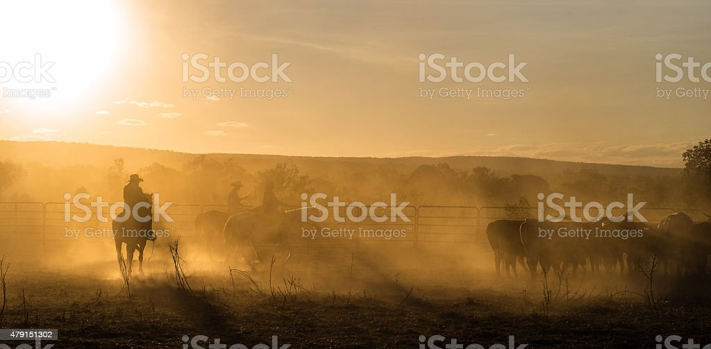 Mustering, Kimberley, Western Australia stock photo