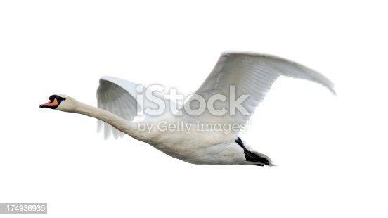 istock Mute Swan (Cygnus olor) 174936935