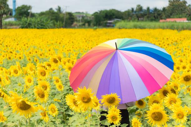 muticolor Regenschirm im Sonnenblumenfeld – Foto