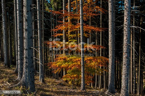 abstract shot of multicolored tree in the forest.
