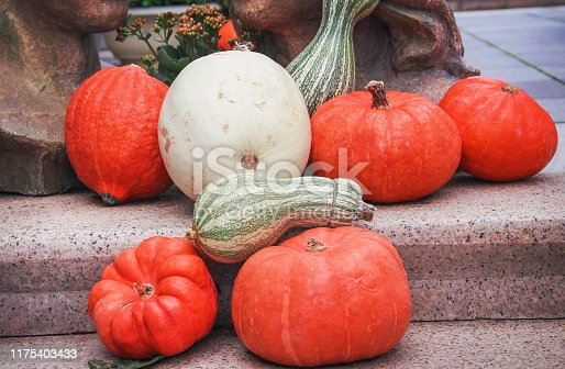 Muticolored fresh pumpkins group decoration in stone stair