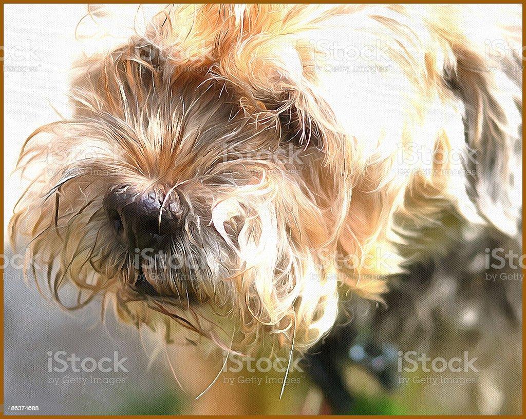 Mutt stock photo