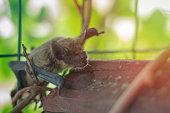istock Muzzle bat close up in nature 1030702510