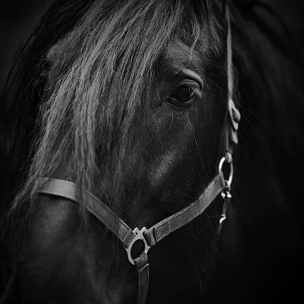 Muzzle of a horse. stock photo