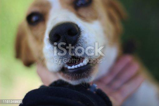 a soft little dog