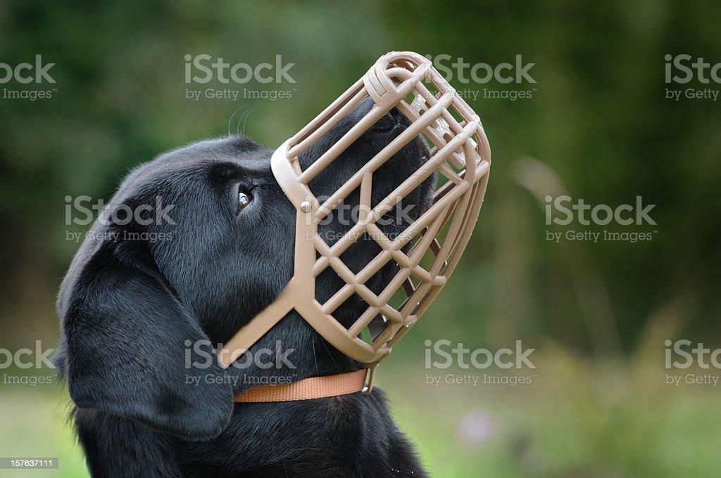 Muzzled Dog stock photo