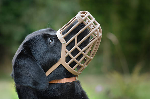Muzzled Dog  snout stock pictures, royalty-free photos & images