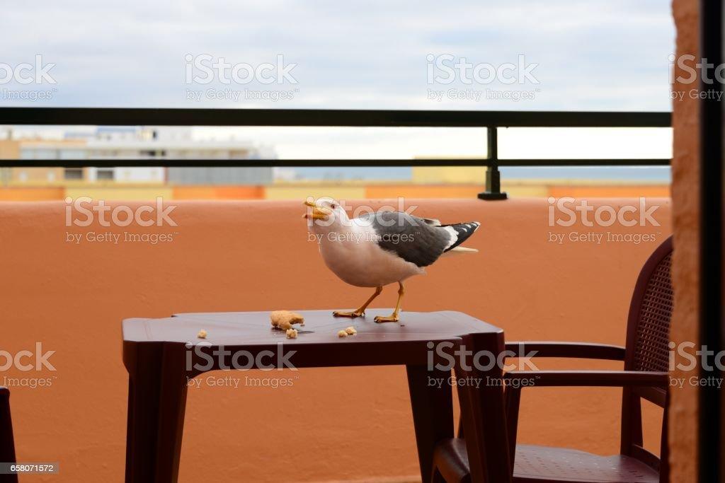 Möwe auf dem Geländer - Spanien - Provinz Huelva royalty-free stock photo