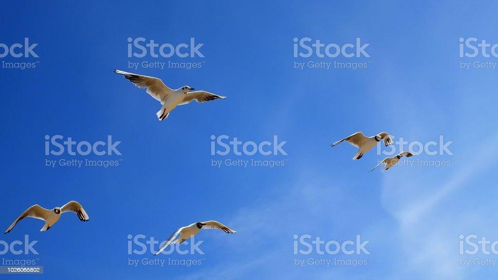 Möwen am blauen Himmel - Lizenzfrei Deutschland Stock-Foto