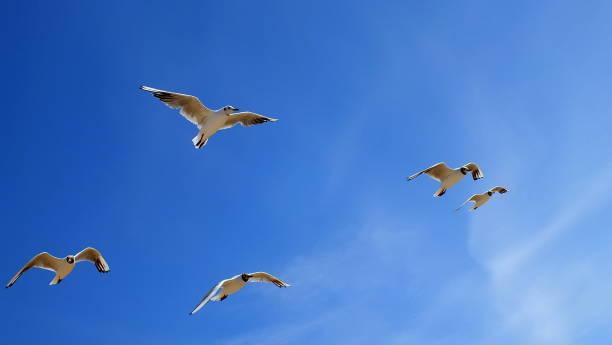 Möwen am blauen Himmel – Foto