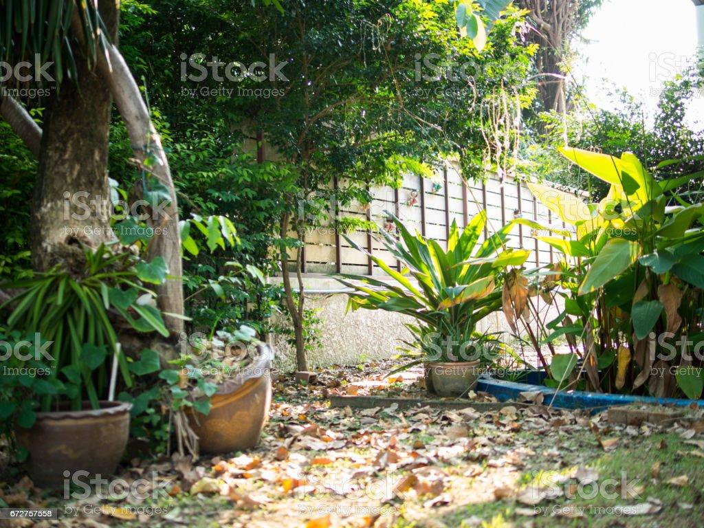 My backyard plantation. stock photo