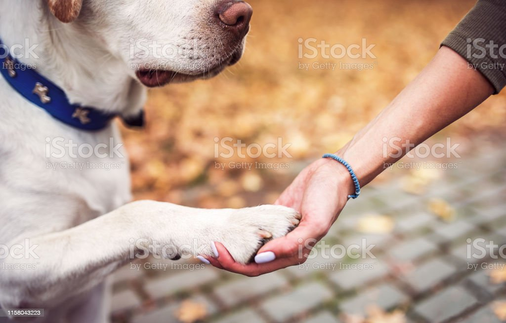 Dog owner holds a paw in a hand. Friendship between human and dog....