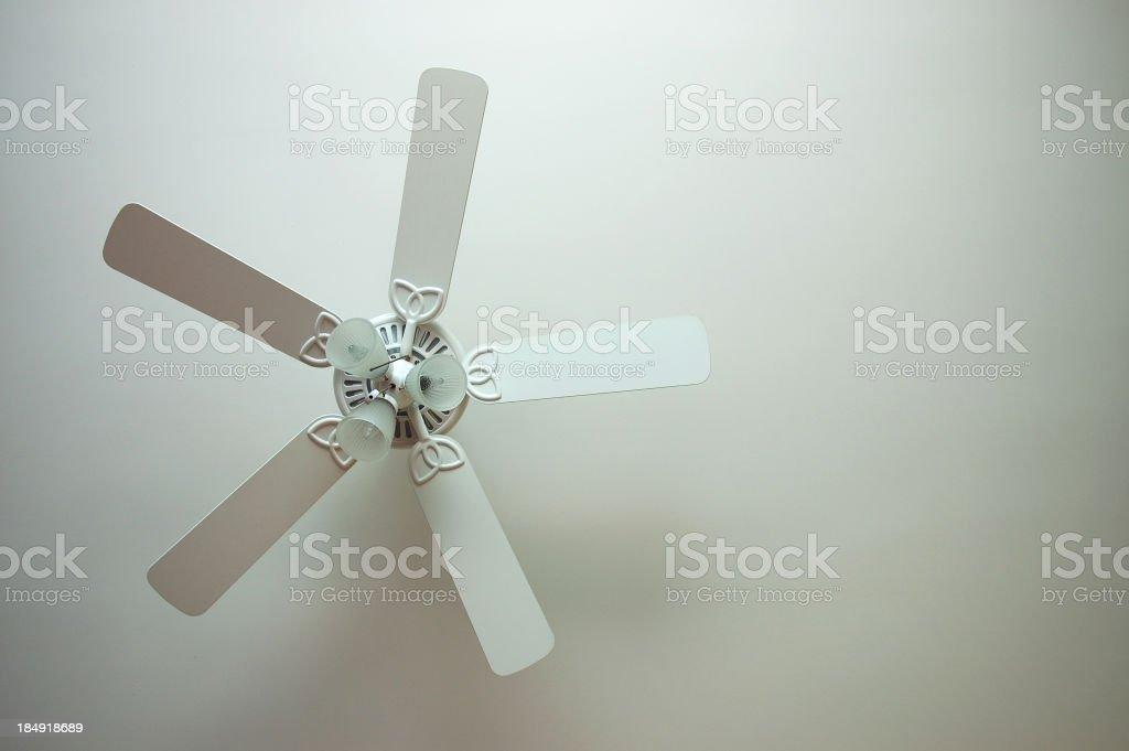 My Biggest Fan stock photo
