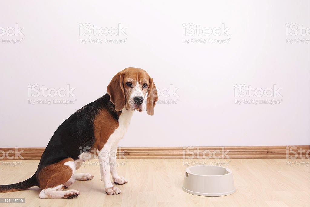 My bowl is empty stock photo