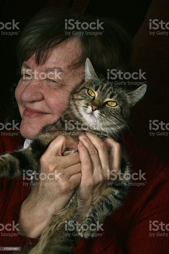 my cat royalty-free stock photo