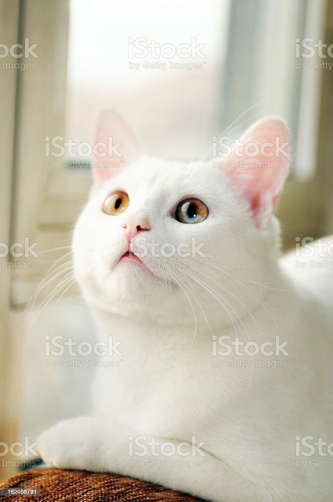 My cat.. royalty-free stock photo
