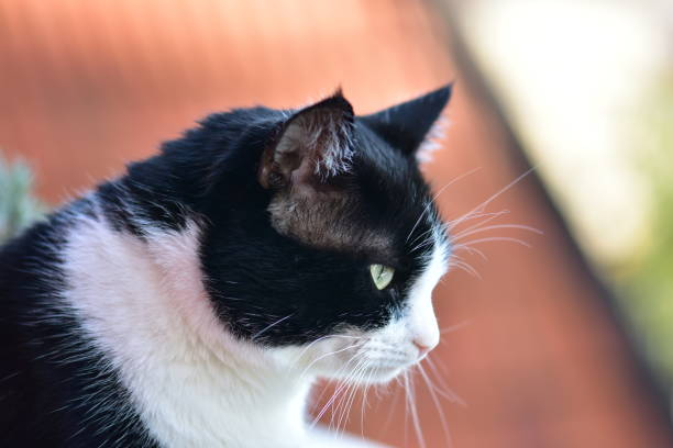 Meine Liebe Katze – Foto