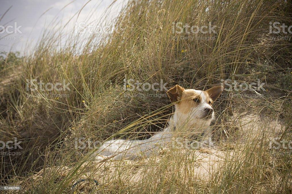 My dog royalty-free stock photo