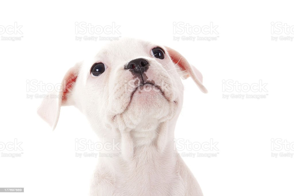 My dogface stock photo