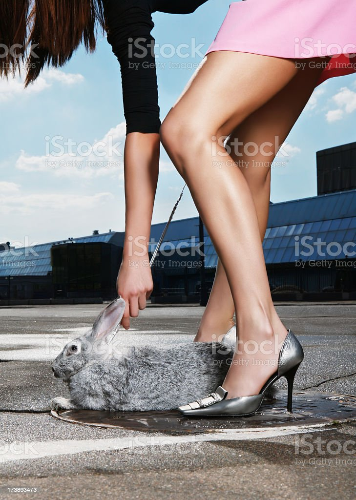 Cтоковое фото Мой любимые кролика