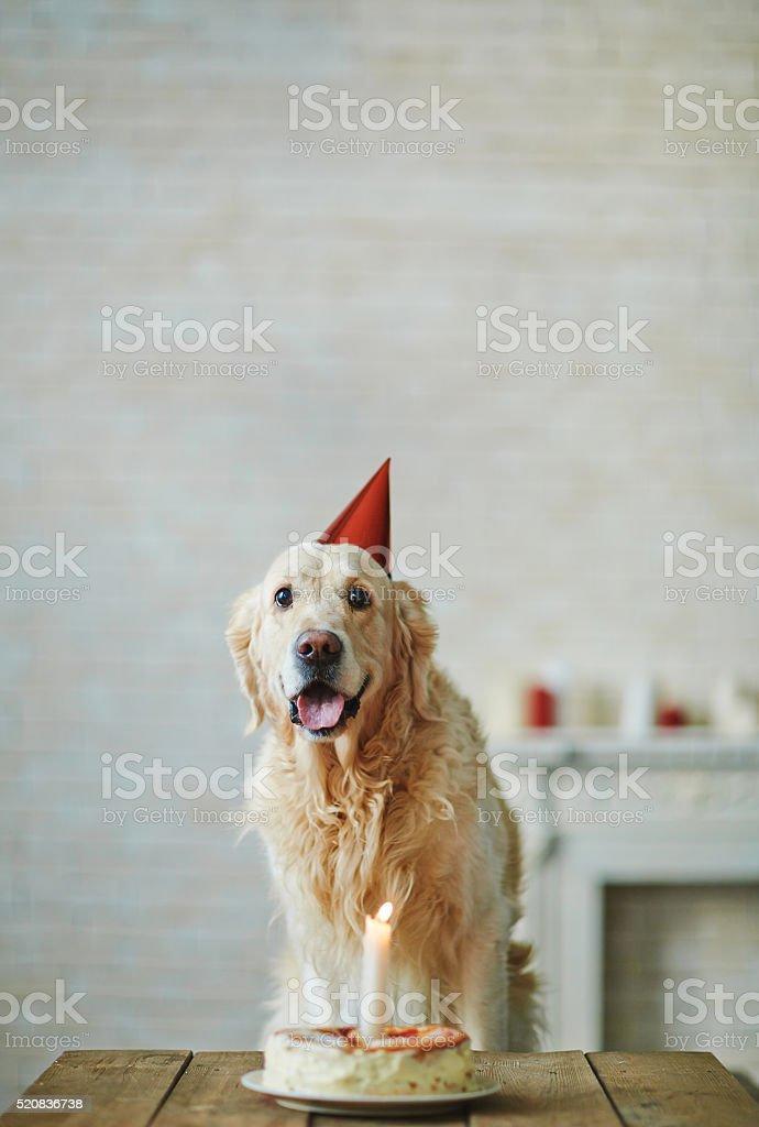 My first birthday stock photo