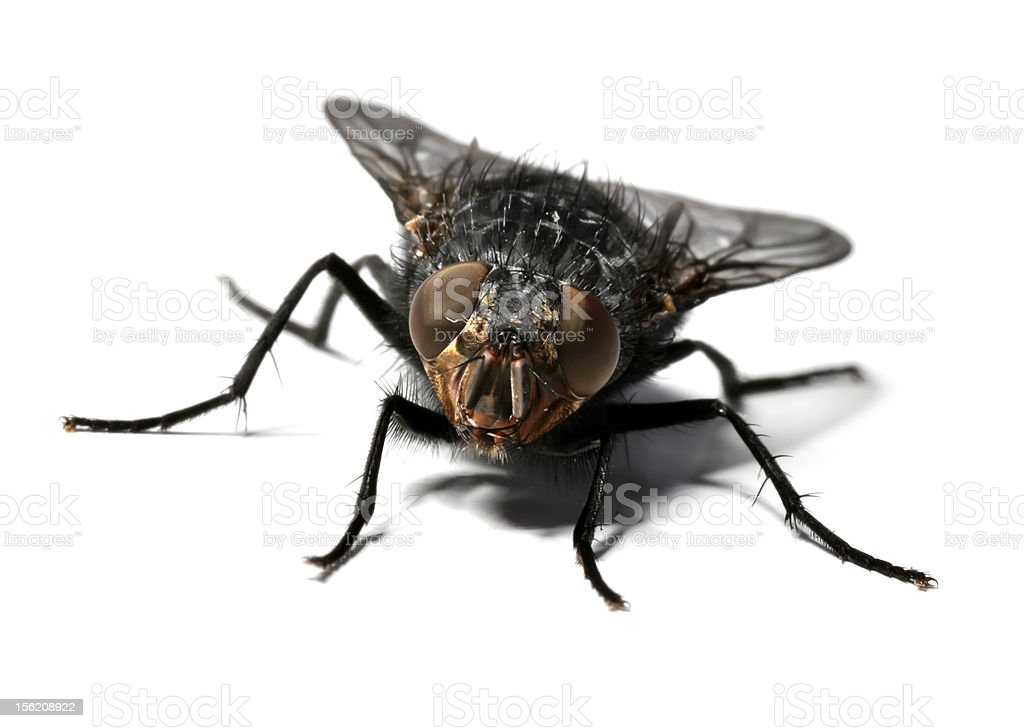 My Fly stock photo