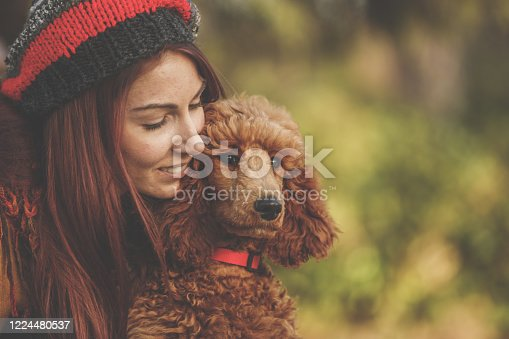 Front view of a red standard poodle looking forwards while its owner looks at it closely.