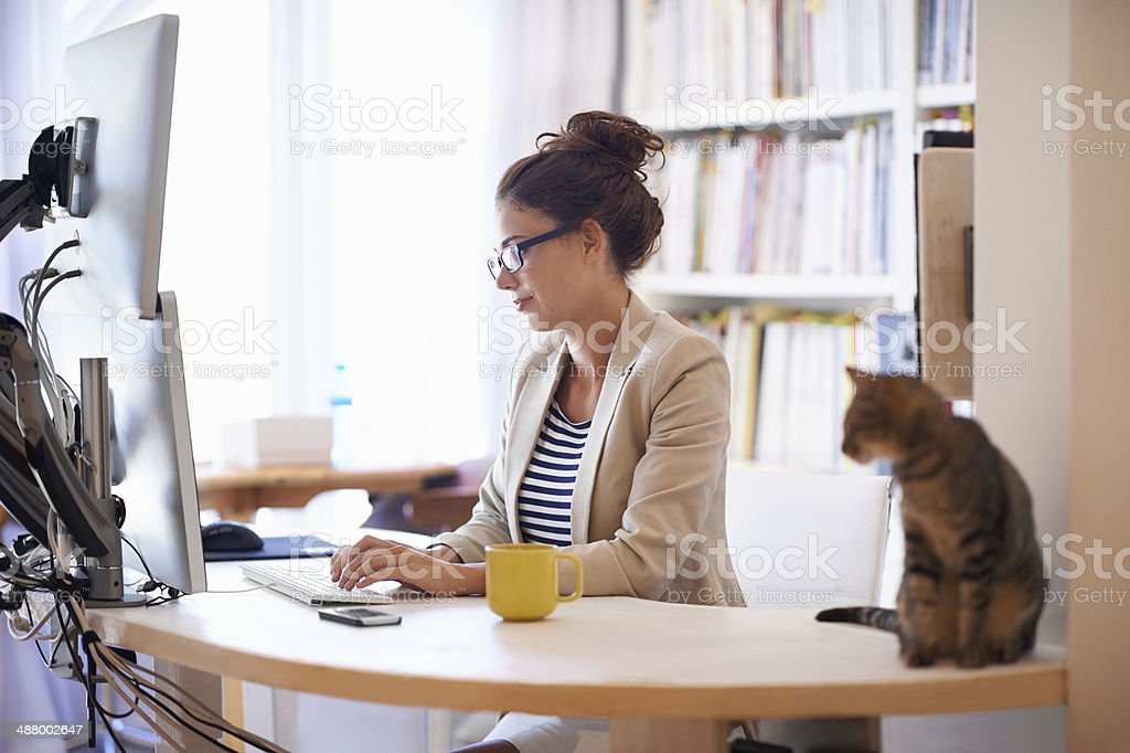My furry coworker stock photo