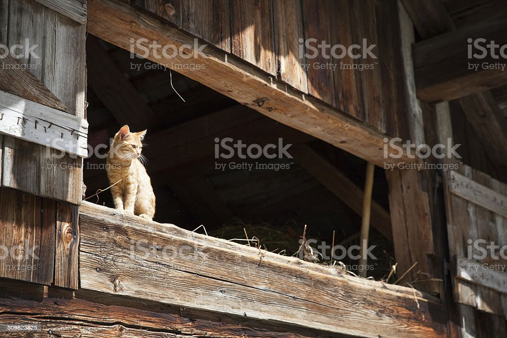 my home is my castle!!! stock photo