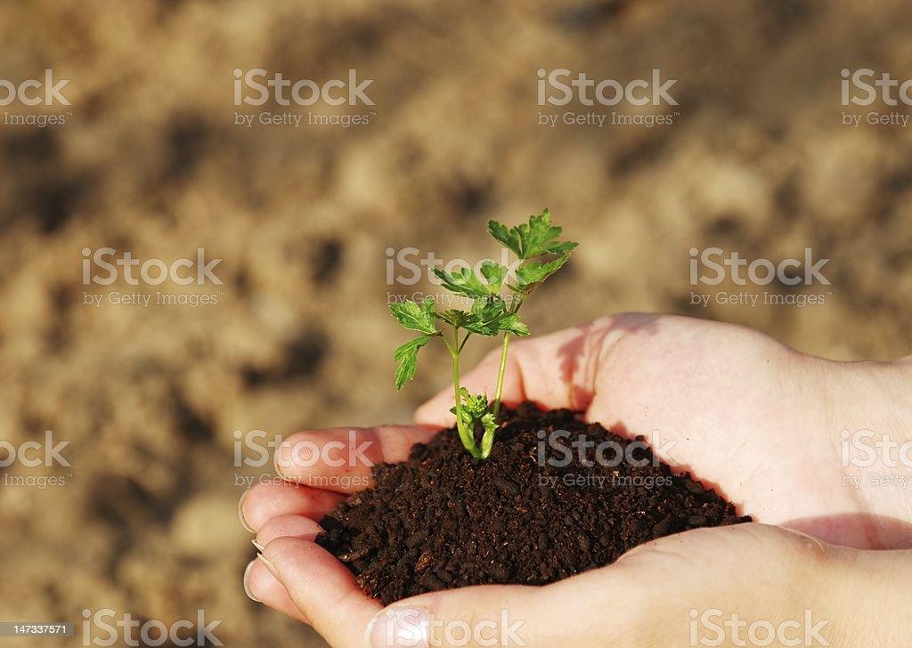 My little plant stock photo