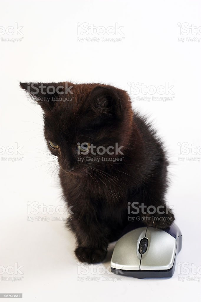 My mouse royalty-free stock photo