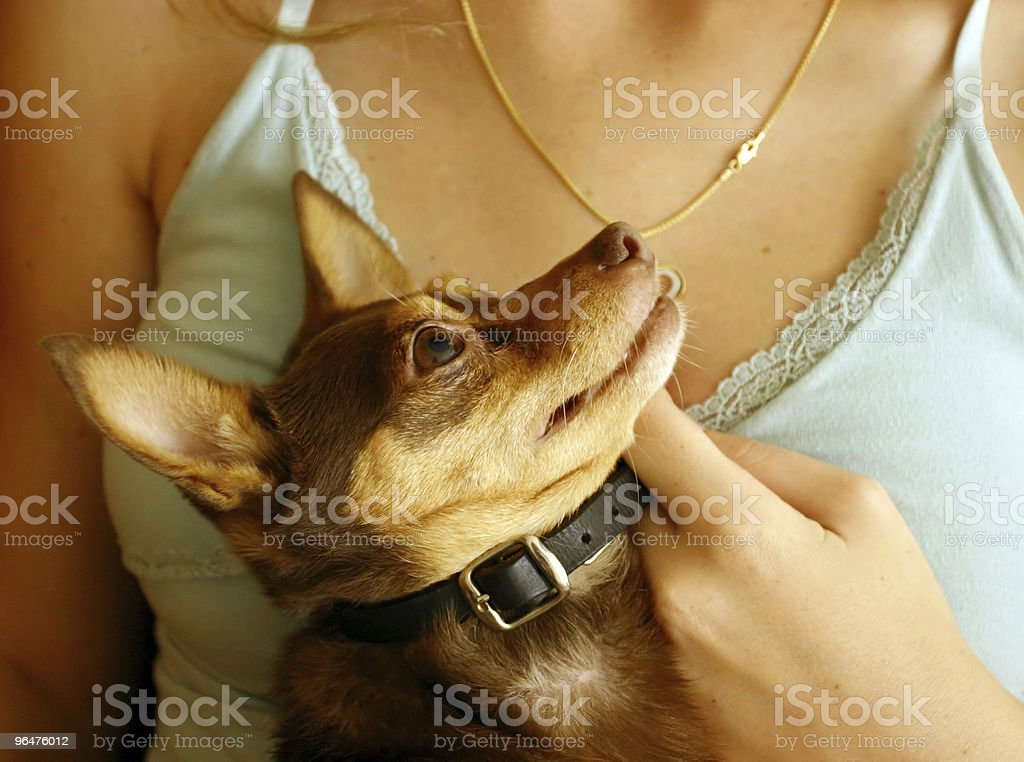 my owner and protector royalty-free stock photo