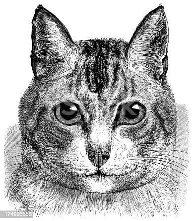 Etching of a cat...This is a high-resolution scan from a book published by Dana Estes & Company in 1899. COPYRIGHT INFORMATION