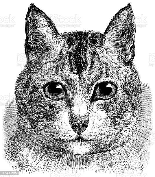 My pet cat picture id174995553?b=1&k=6&m=174995553&s=612x612&h=paht mwfw65unukfrersfv92bev4z e1im70zzlvbp4=