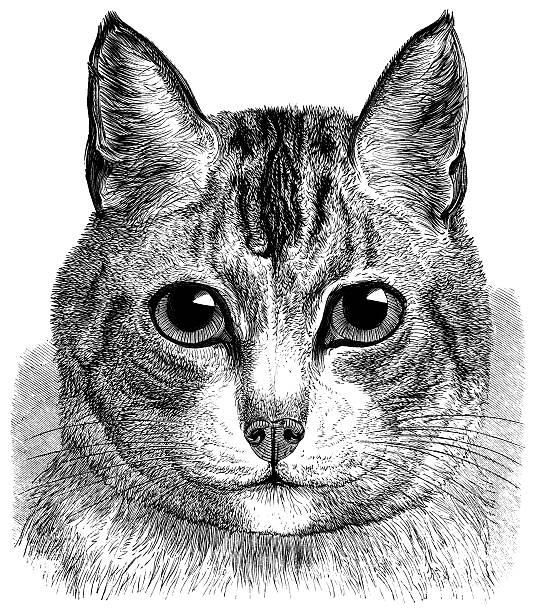 mein haustier katze - katze zeichnen stock-fotos und bilder