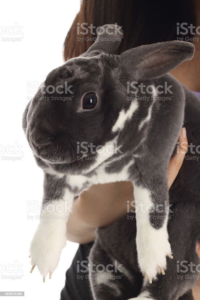 My pet rabbit royalty-free stock photo