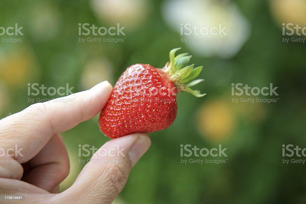 My strawberry royalty-free stock photo