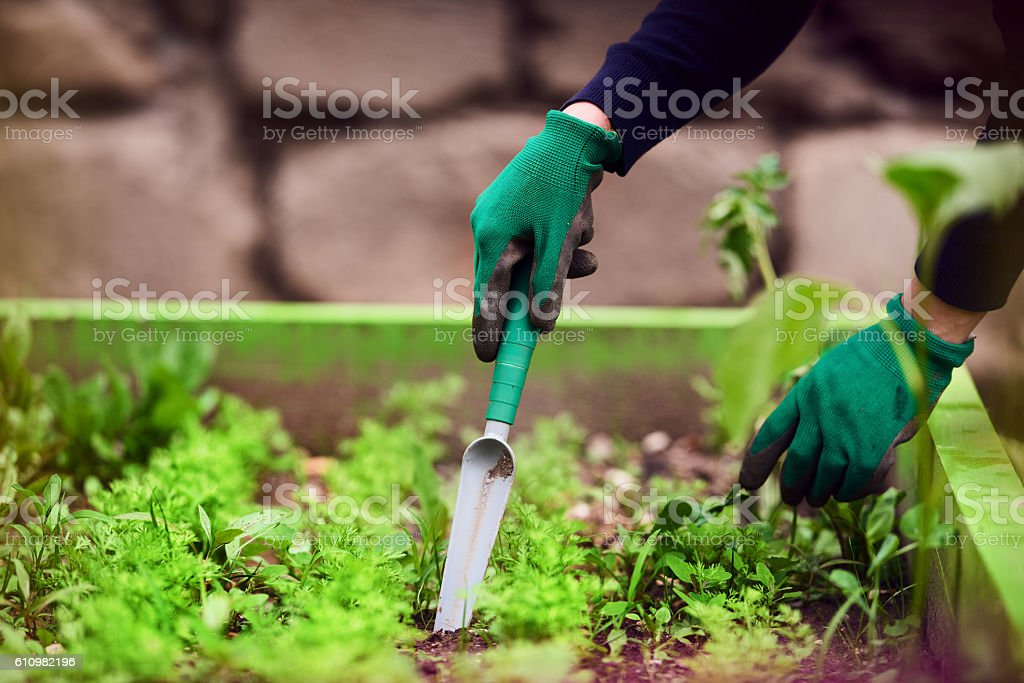 my way to relax is planting seeds stock photo