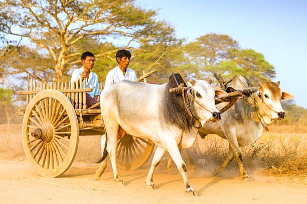 Myanmar la vie de tous les jours - Photo