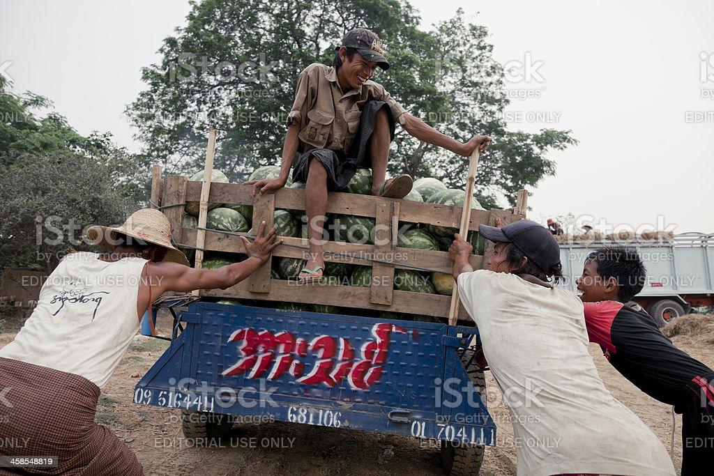 Myanmar Farmer royalty-free stock photo