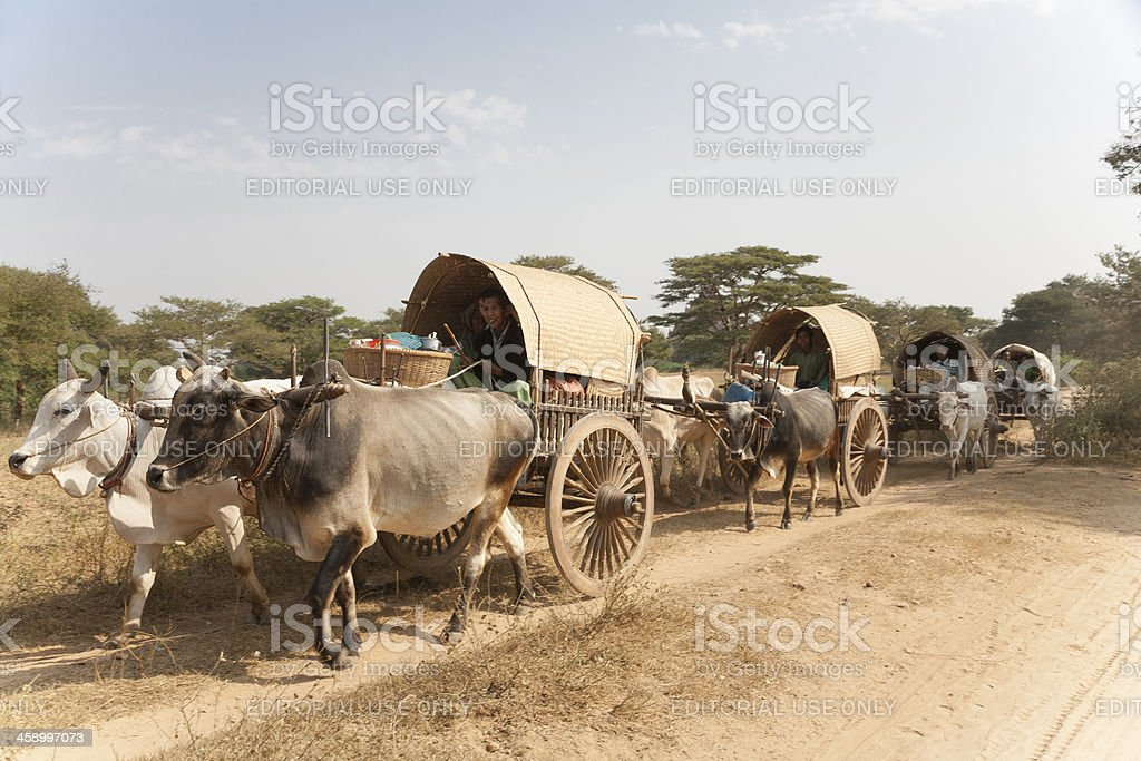 Myanmar: Oxcarts Traveling to New Year's Festival stock photo