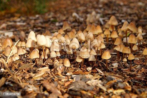 mushroom on bark mulch ground