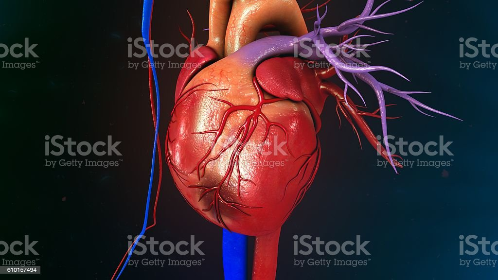 Myocardial Infarction stock photo