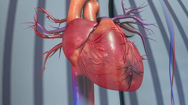 myocardial infarction - spetsig vinkel bildbanksfoton och bilder