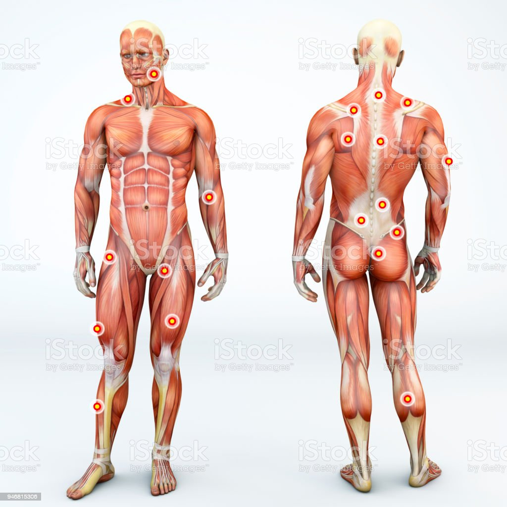 Myofascial trigger points, are described as hyperirritable spots in the fascia surrounding skeletal muscle. Palpable nodules in taut bands of muscle fibers. Front and back view of a man. 3d rendering royalty-free stock photo