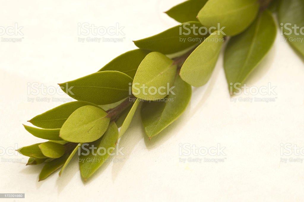 Myrtle Branch stock photo