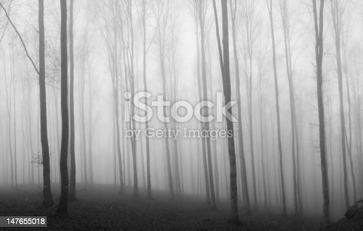 istock Myst Forest, b/n, grainy 147655018