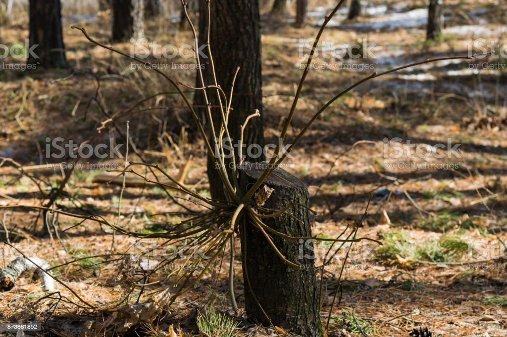 Mysterious and magic tree stock photo