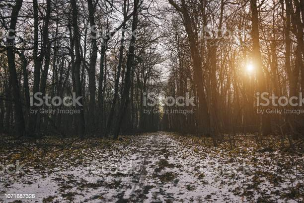 Photo of Mysterious and terrible forest at the evening after first snow. Magic winter landscape. Dreary and gloomy weather.
